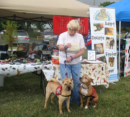 Shar-Pei Rescue - Bark in the Park