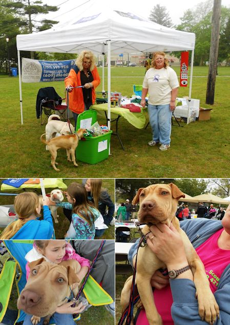 Shar-Pei Rescue - Second Chance Pet Adoption Day