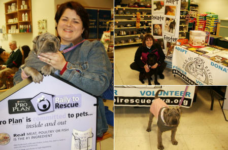 Shar-Pei Rescue Events