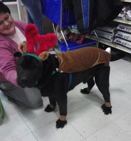 Shar-Pei Rescue - PetsMart Santa Photos