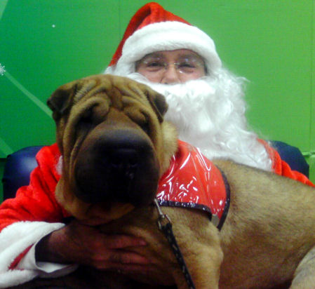 Shar-Pei Rescue - Santa Photos 2011