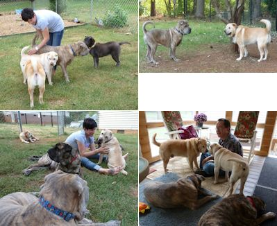 Shar-Pei Picture - Reunion